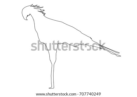 Namibian Birds Stock Images, Royalty-Free Images & Vectors