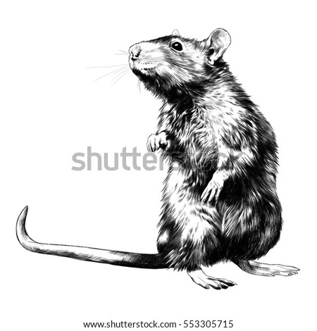Rats Stock Images, Royalty-Free Images & Vectors
