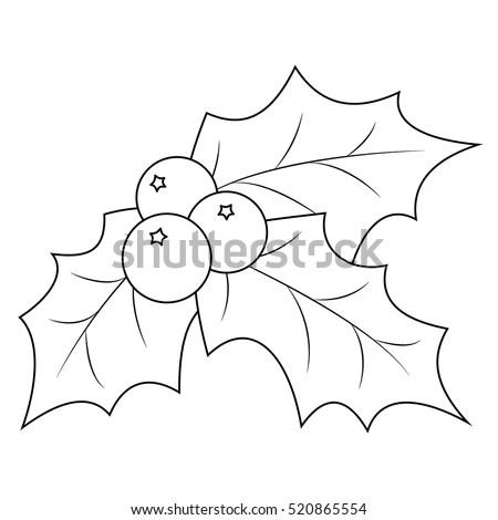 Diagram Of Poinsettia Diagram Of Tulip Wiring Diagram ~ Odicis