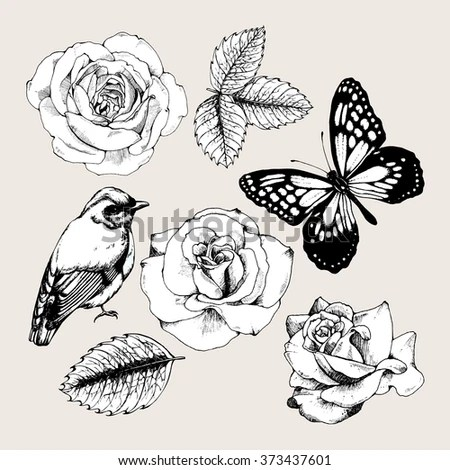 Vintage Background Flowers Flying Butterflies Handdrawing