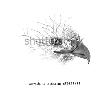 Black White Line Drawing Eagle Stock Images, Royalty-Free