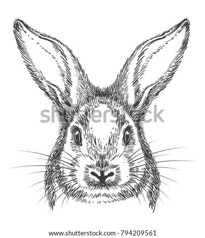 Rabbit Eye Stock Images, Royalty-Free Images & Vectors