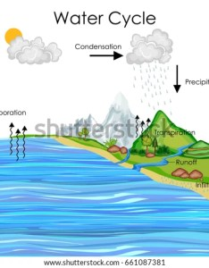 Education chart of biology for water cycle diagram vector illustration also stock royalty rh shutterstock