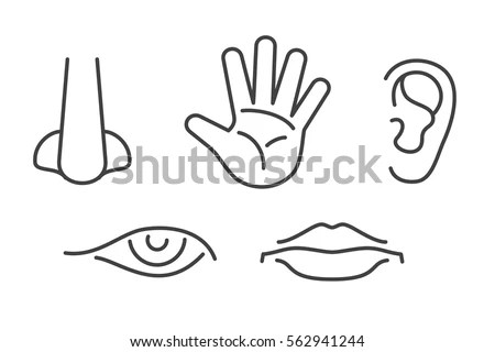 Five Senses Vector Icons Set Isolated Stock Vector