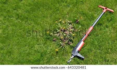 Weed Removal By Hand Lawn Maintenance Stock Photo Royalty