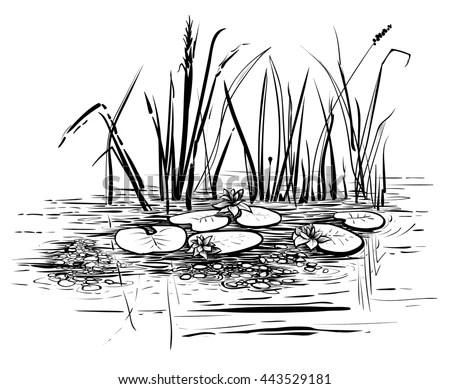 Marsh Grass Stock Images, Royalty-Free Images & Vectors