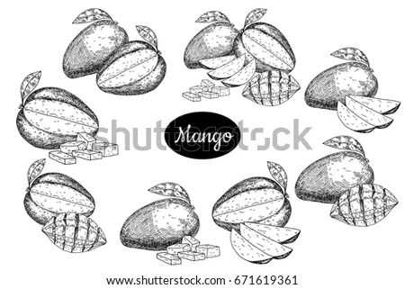 Mango Sketch Stock Images, Royalty-Free Images & Vectors