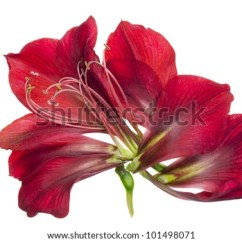 Labelled Diagram Of Hibiscus Flower Hiniker Snow Plow Wiring Anatomy Stock Images, Royalty-free Images & Vectors   Shutterstock