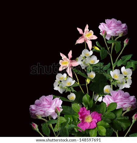 Black Background With Flowers Stock Images RoyaltyFree