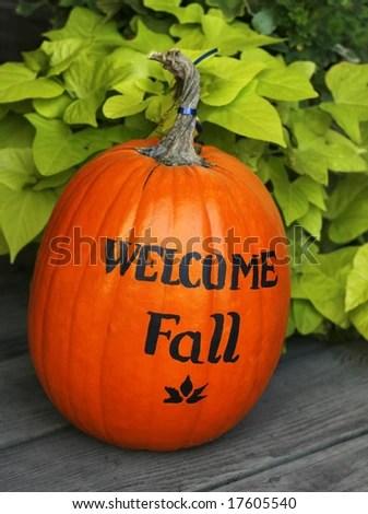 autumn scene mums pumpkins gourds