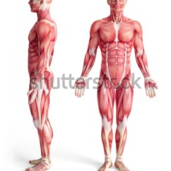 Eye Anatomy Vintage Diagram Mortgage Process Male Of Muscular System - Front And Side View Stock Photo