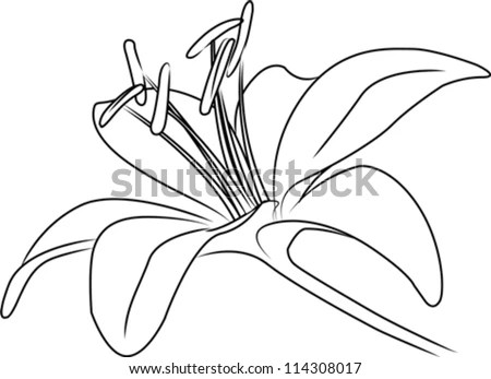 Blooming Asiatic Lily Flower On Stem Stock Vector