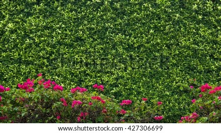 Box Hedging Stock Photos Royalty Free Images Amp Vectors