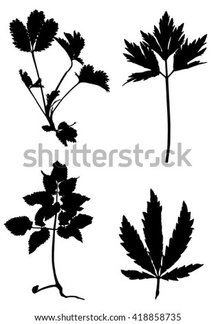 Plant Silhouette Stock Photos, Royalty-Free Images