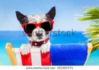 Dog Sunbathing On Deck Chair Stock Photo 99555074 ...