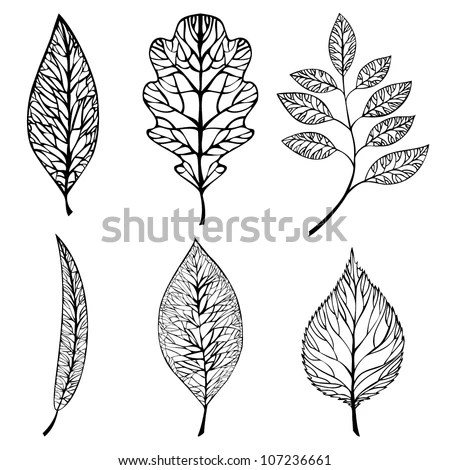 Leaf Silhouette Stock Photos, Royalty-Free Images