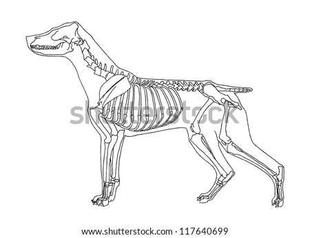 Dog Skeleton Stock Images, Royalty-Free Images & Vectors