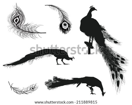 Peacock Silhouette Stock Images, Royalty-Free Images
