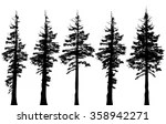 Evergreen Trees Washington Forest Free Stock Photo