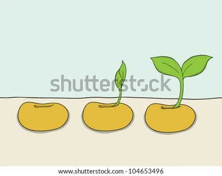 bean seedling diagram corsa b wiring seed stock photos, images, & pictures | shutterstock