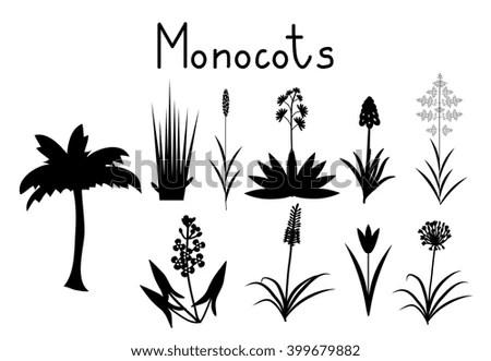 Monocotyledons Stock Photos, Royalty-Free Images & Vectors