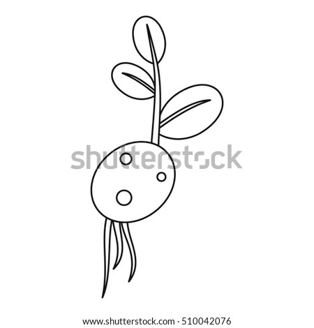 Red Barberry Vector Be Traced Restore Stock Vector