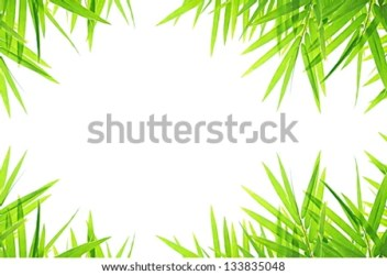 bamboo border leaf background shutterstock royalty preview