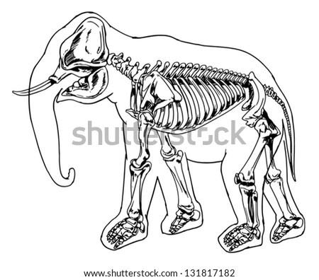Diagram Of Extinction, Diagram, Free Engine Image For User