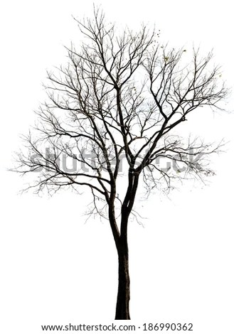Scary Tree Stock Images, Royalty-Free Images & Vectors