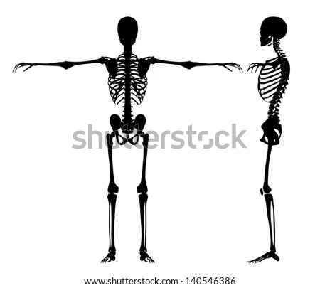 Arm Bone Stock Images, Royalty-Free Images & Vectors