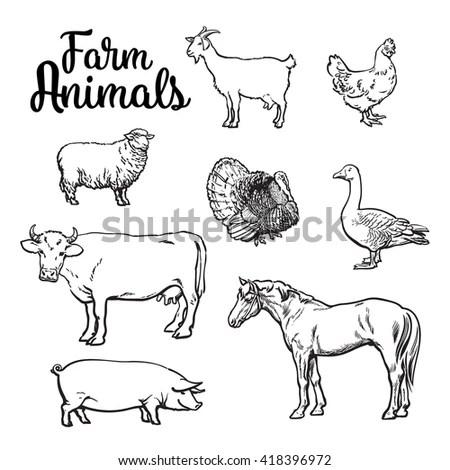 Vintage Farm Animals Drawings Set Vector Stock Vector