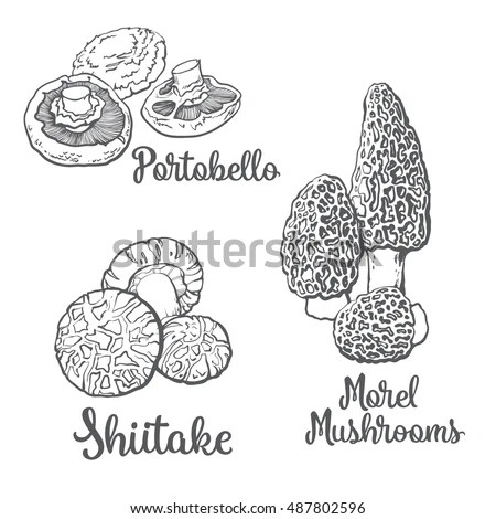 Morels Stock Images, Royalty-Free Images & Vectors