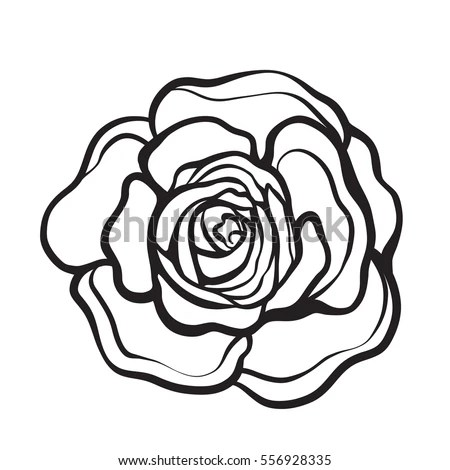 Rose Flower Isolated Outline Hand Drawn Stock Vector