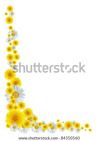 dandelion border stock