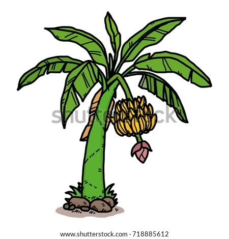 banana tree cartoon vector illustration