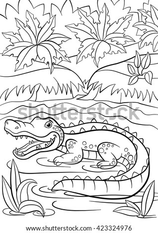 Small Alligator Stock Photos, Royalty-Free Images