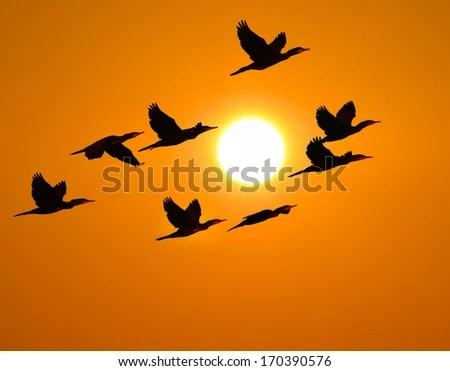 Sunrise Dark Clouds Shadow Cormorant Bird 庫存照片 170392733 - Shutterstock