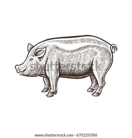 Pig2 Vector Illustration Pig Farm Landscape Stock Vector