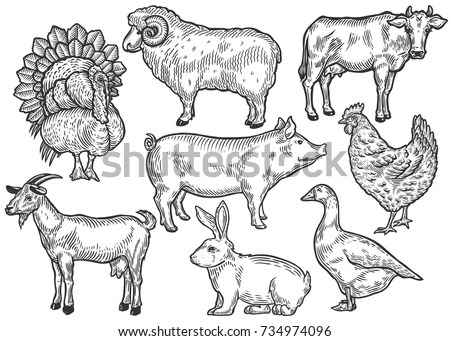 Vector Set Farm Animals Various Retrostyle Stock Vector