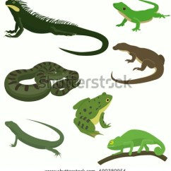 Chameleon Life Cycle Diagram Bmw E61 Tailgate Wiring Tailed Amphibians Stock Images, Royalty-free Images & Vectors | Shutterstock