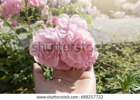 Rose Garden Stock Images Royalty Free Images Amp Vectors