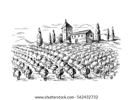 Rows Vineyard Grape Plants Castle Graphic Stock Vector