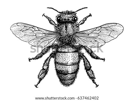Bee Illustration Drawing Engraving Ink Line Stock Vector