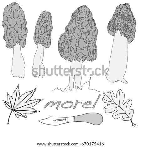 Morel Stock Images, Royalty-Free Images & Vectors