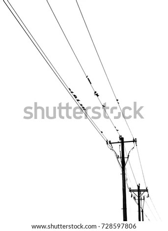 Birds On A Telephone Wire Stock Images, Royalty-Free