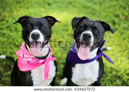 Twins Stock Images Royalty Free Images & Vectors