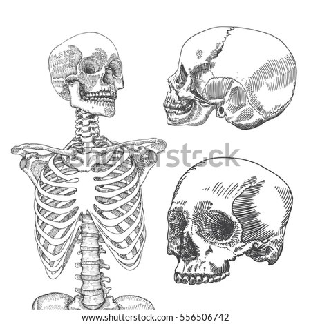 Rib Cage Diagram Unlabeled Thoracic Cage Diagram Unlabeled