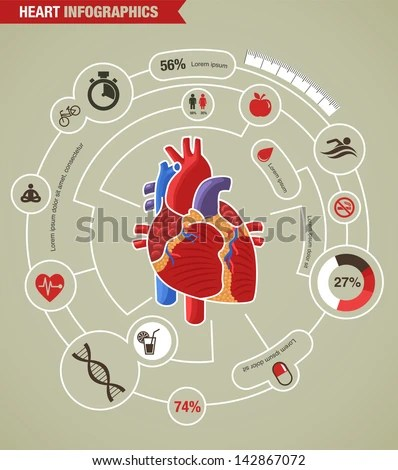 vintage red real heart diagram gallbladder location human stock images, royalty-free images & vectors | shutterstock