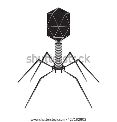 Bacteriophage Stock Images, Royalty-Free Images & Vectors