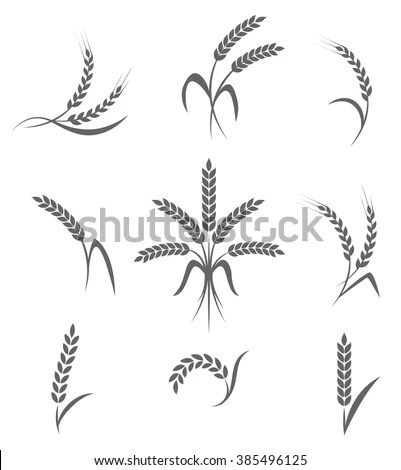 Wheat Ears Rice Icons Set Agricultural Stock Vector